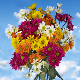 Daisies Choose Your Quantity & Color From 18 to 144 Flowers