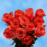 12 Stems of Orange Roses                                                              For Delivery to Tennessee