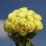 50 Stems of Greenish Yellow, Mint Roses