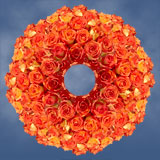 250 Stems of Bright Orange with Yellow, Caribbean Roses