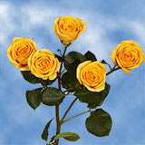 40 Stems of Yellow Spray Roses 160 Blooms