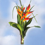 4 Grand Tropical Arrangements