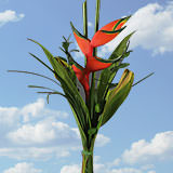 8 Red Heliconia Arrangements                                                              For Delivery to Texas