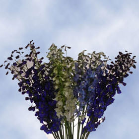 Assorted Delphinium Volken Choose Your Quantity From 960 - 3840 Blooms: 60 - 240 Flowers