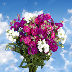 Stock Choose Your Quantity From 40 to 200 Flowers
