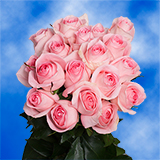 50 Stems of Soft Light Pink Roses