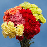 200 Stems of Assorted Colors of Carnations