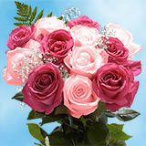 8 Dozens Two Tones of Pink Roses