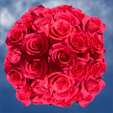 100 Stems of Hot Pink, Pink Floyd Roses