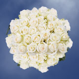 75 X Long Stems of Off White, Mount Everest Roses                                                              For Delivery to Wisconsin