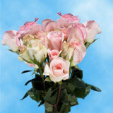 50 Stems of Pastel Pink, Light Orlando Roses