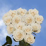 100 Stems of White Spray Roses 350 Blooms                                                              For Delivery to Michigan