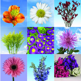 100 Stems of Your Choice Assorted Specialty Flowers & Filers