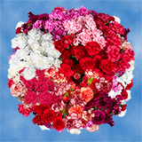 300 Stems of Long Stem Assorted Color Spray Carnations 1200 Blooms