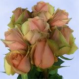50 Stems of Pure Peach, Azafran Roses