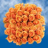 100 Stems of Peach, Cuenca Roses                                                              For Delivery to Virginia