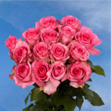 50 Stems of Deep Pink, Priceless Roses
