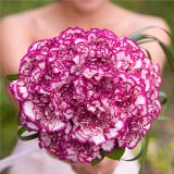 6 Purple Carnations Bridesmaids Bouquets