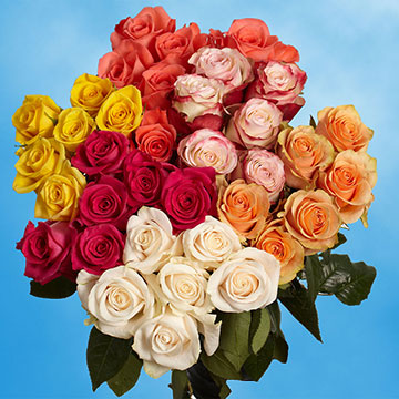 100 Stems of Assorted Color Roses