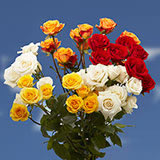 40 Stems of Assorted Color Spray Roses 160 Blooms