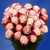 75 X Long Stems of White with Pinkish Red, Sweetness Roses                                                              For Delivery to Georgia