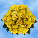 100 Stems of Light Yellow, Yokohama Roses