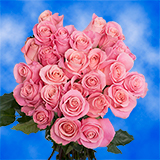 50 Stems of Soft Pink Roses