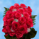 24 Stems of Hot Pink Roses with Fillers