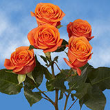 200 Stems of Orange Spray Roses 700 Blooms