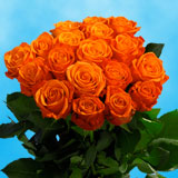50 Stems of Orange Crush Roses