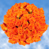 150 X Long Stems of Bright Orange, Miracle Roses