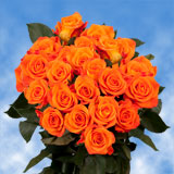 75 X Long Stems of Bright Orange, Miracle Roses