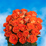 50 Stems of Bright Orange