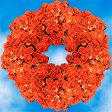 250 Stems of Bright Orange                                                              For Delivery to Missouri