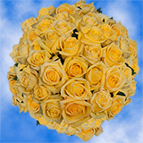 150 X Long Stems of Bright Yellow Roses