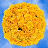 100 Stems of Bright Yellow Roses