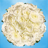 200 Stems of White with a Touch of Green, Escimo Roses