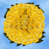 200 Stems of Yellow, Stardust Roses