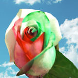 100 Green & Red Rainbow Roses