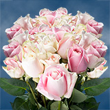 75 X Long Stems of Soft Pink, Rosita Vendela Roses