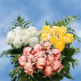 3 Dozen Your Choice of Color Roses