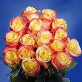 50 Stems of Creamy Yellow with Red Tips, Florida Roses