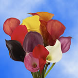 10 Stems of Assorted Color Calla Lilies