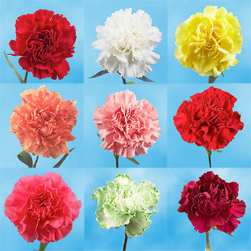 Mix & Match Your Choice of Carnations