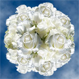 100 Stems of Pure White, Akito Roses