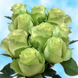 50 Stems of Lime Green, Limbo Roses                                                              For Delivery to Idaho
