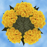 250 Assorted Yellow Roses