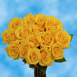 50 Stems of Yellow, Gold Star Roses