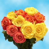50 Stems of Roses: 25 Yellow and 25 Orange
