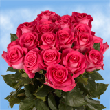 75 X Long Stems of Bright Hot Pink, Topaz Roses